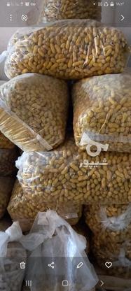 بادام زمینی غلافدار دست چین در گروه خرید و فروش خدمات و کسب و کار در کردستان در شیپور-عکس2