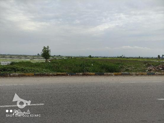 فروش فوری زمین تجاری 9500 متری عالی و مناسب در گروه خرید و فروش املاک در مازندران در شیپور-عکس1
