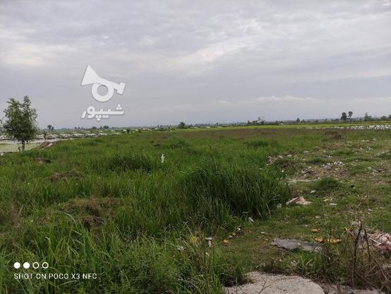 فروش فوری زمین تجاری 9500 متری عالی و مناسب در گروه خرید و فروش املاک در مازندران در شیپور-عکس3