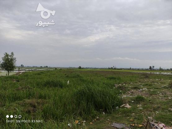 فروش فوری زمین تجاری 9500 متری عالی و مناسب در گروه خرید و فروش املاک در مازندران در شیپور-عکس2