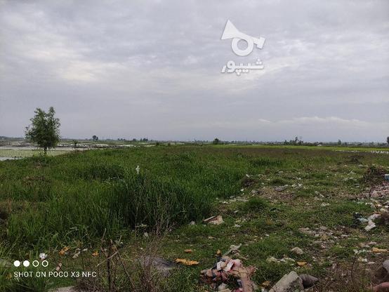 فروش فوری زمین تجاری 9500 متری عالی و مناسب در گروه خرید و فروش املاک در مازندران در شیپور-عکس4