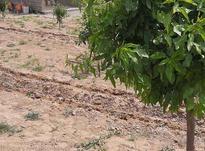 فروش باغچه 700 متر در نظرآباد در شیپور-عکس کوچک