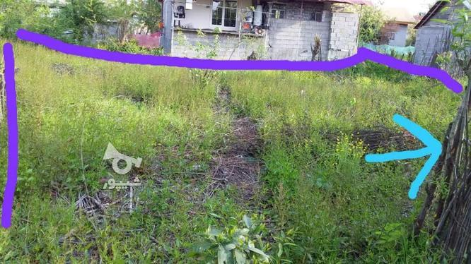 زمین مسکونی داخل روستا300متر در گروه خرید و فروش املاک در گیلان در شیپور-عکس1