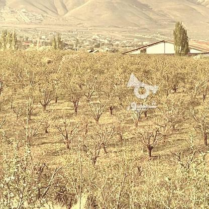 فروش باغچه 441 متر در جابان در گروه خرید و فروش املاک در تهران در شیپور-عکس1