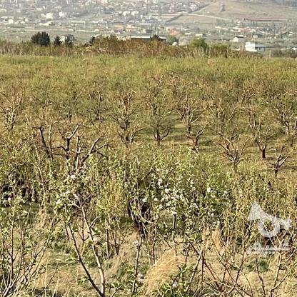 فروش باغچه 441 متر در جابان در گروه خرید و فروش املاک در تهران در شیپور-عکس5