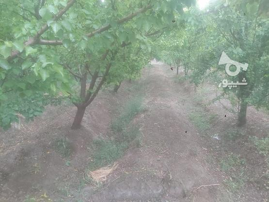 باغ 800 متری روستا ایچی در گروه خرید و فروش املاک در اصفهان در شیپور-عکس1