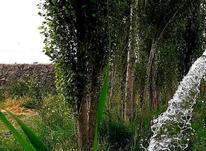 فروش باغچه ویلایی336 متر در جابان در شیپور-عکس کوچک