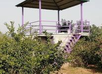 فروش باغ 3275 متری رودپشت در شیپور-عکس کوچک