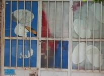 فروش مغازه کلنگی خ امام انار کرمان در شیپور-عکس کوچک