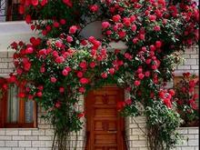 تمامی خدمات باغبانی در شیپور