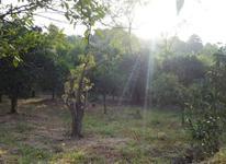 فروش مجموعه زمین به صورت یکجا و قطعه در تنکابن در شیپور-عکس کوچک