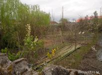 زمین باغی 400 متری /خشکبیجار در شیپور-عکس کوچک