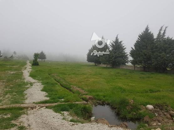 زمین ویلایی شهررویایی کلاردشت در گروه خرید و فروش املاک در مازندران در شیپور-عکس2