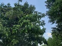 باغ 205 متر در جابان دماوند آماده فروش در شیپور-عکس کوچک