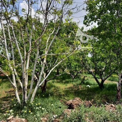 فروش باغ 210متر در جابان دماوند در گروه خرید و فروش املاک در تهران در شیپور-عکس1