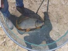 پرورش ماهی قصرشیرین در شیپور
