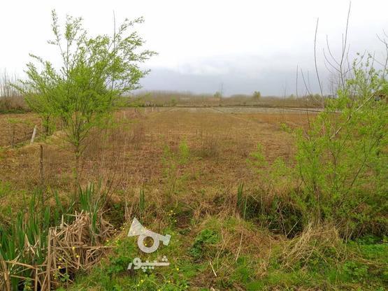فروش زمین 1050 متری (مسکونی - باغی) صومعه سرا - میانده در گروه خرید و فروش املاک در گیلان در شیپور-عکس3