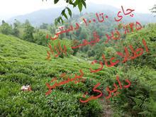 چای دستی 0 تا 100 از باغ خودم 25٪ زیر قیمت در شیپور