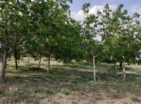 باغ گردو ومیوه در روستای نمازگاه در شیپور-عکس کوچک