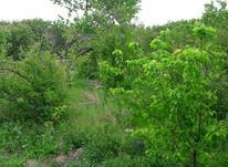 باغ سرسبزراوند در شیپور-عکس کوچک