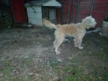 سگ.پشمالو گمشده در شیپور