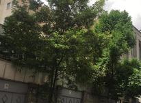 فروش کلنگی 165 متر در دزاشیب در شیپور-عکس کوچک