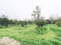باغ مرکبات 2,000 متری جاده نظامی روستا باغ دشت در شیپور-عکس کوچک