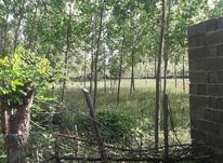 زمین مسکونی 281 متردلیوندان صومعه سرا در شیپور-عکس کوچک