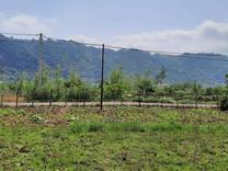 فروش زمین 487 متری در لیالستان لاهیجان در شیپور