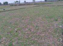 فروش زمین کشاورزی 250 متر در رضوانشهر در شیپور-عکس کوچک