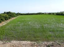 فروش فوری زمین 600متری مناسب برای باغ در شیپور-عکس کوچک