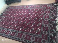 فرش دست بافت ترکمنی در شیپور-عکس کوچک