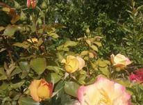 باغ 1000 متر در دماوند_جابان  در شیپور-عکس کوچک
