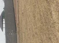 زمین کشاورزی 1200 متر در ملارد در شیپور-عکس کوچک
