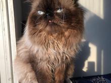 گربه گمشده در چمخاله در شیپور