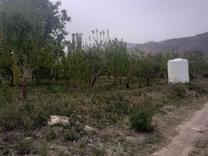 فروش زمین کشاورزی 300 متر در دماوند جابان در شیپور