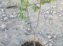 باغچه زمین 400 متر در رباط کریم در شیپور-عکس کوچک