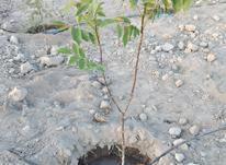 باغچه زمین 1000 متر در رباط کریم در شیپور-عکس کوچک