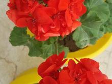 باغبانی و گلکاری شما با ما در شیپور