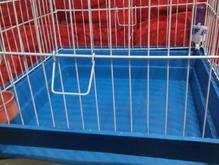 قفس بزرگ برای نگهداری خوکچه هندی و خرگوش در شیپور