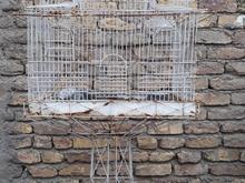 قفس پایه دار در شیپور