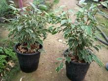 استخدام کارگر ساده در امور باغبانی و گلخانه در شیپور