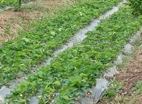 فروش زمین کشاورزی 70000 متر در بابلسر در شیپور-عکس کوچک
