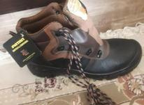 کفش کار نونو در شیپور-عکس کوچک