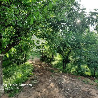 فروش 3جریب باغ جنگلی در شکرک در گروه خرید و فروش املاک در زنجان در شیپور-عکس5