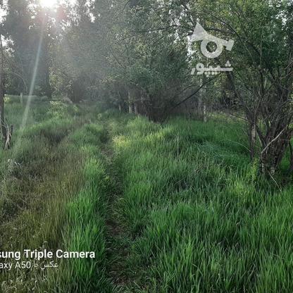 فروش 3جریب باغ جنگلی در شکرک در گروه خرید و فروش املاک در زنجان در شیپور-عکس11