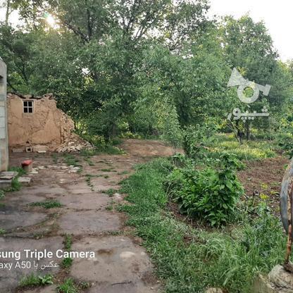 فروش 3جریب باغ جنگلی در شکرک در گروه خرید و فروش املاک در زنجان در شیپور-عکس10