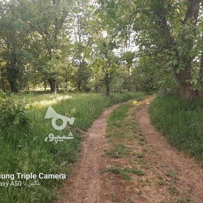 فروش 3جریب باغ جنگلی در شکرک در گروه خرید و فروش املاک در زنجان در شیپور-عکس7