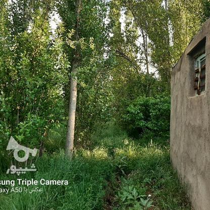 فروش 3جریب باغ جنگلی در شکرک در گروه خرید و فروش املاک در زنجان در شیپور-عکس2