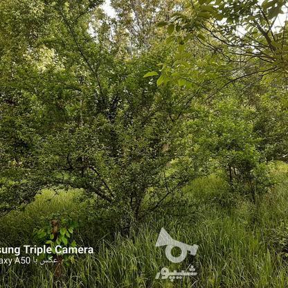 فروش 3جریب باغ جنگلی در شکرک در گروه خرید و فروش املاک در زنجان در شیپور-عکس4